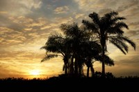 Everglades Sunrise Fine Art Print