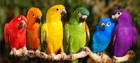 Rainbow Parrots Fine Art Print