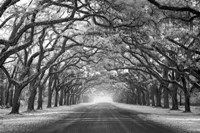 Wormsloe Inf Light Fine Art Print