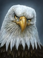 Bald Eagle Totem Fine Art Print