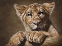 Lion Cub Fine Art Print