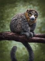Mongoose Lemur Totem Fine Art Print