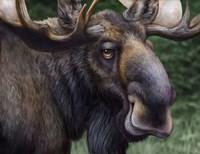 Moose Totem Fine Art Print