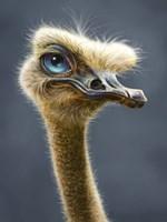 Ostrich Totem Fine Art Print