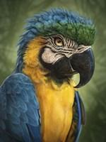 Parrot Totem Fine Art Print