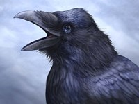 Raven Totem Fine Art Print