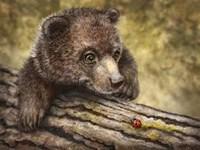 Kodiak Cub Fine Art Print