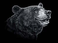 Black White Black Bear Fine Art Print