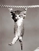 1950s Little Kitten Hanging From Rope Fine Art Print