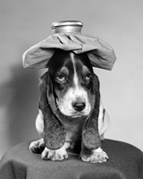 Bassett Hound Dog With Ice Pack On Head Fine Art Print
