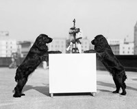 1930s Two Black Cocker Spaniels Standing Fine Art Print