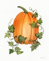 Pumpkin and Vines IV Fine Art Print