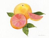 Citrus Garden X Fine Art Print