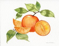 Citrus Garden VIII Fine Art Print