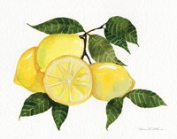 Citrus Garden VI Fine Art Print