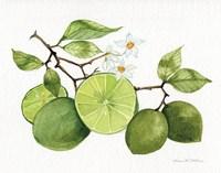 Citrus Garden VII Fine Art Print