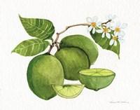 Citrus Garden IV Fine Art Print