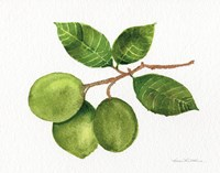 Citrus Garden II Fine Art Print