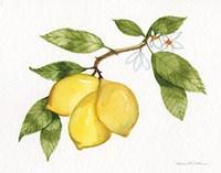Citrus Garden I Fine Art Print