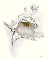 Carols Roses V Off White Fine Art Print