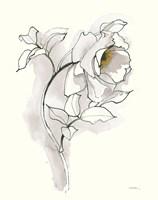 Carols Roses III Soft Gray Fine Art Print
