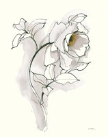 Carols Roses III Soft Gray Fine Art Print