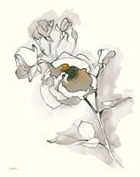Carols Roses IV Tan Fine Art Print