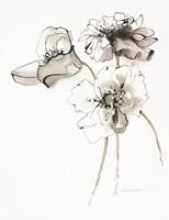 Three Somniferums Poppies Neutral Fine Art Print