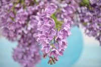 Lilacs in Blue Vase I Fine Art Print