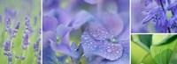 The Blue Garden Fine Art Print