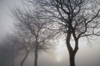 Hazy Dawn with Tree Tree Silhouettes B&W Fine Art Print