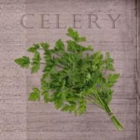 Classic Herbs Celery Framed Print