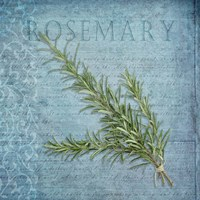 Classic Herbs Rosemary Framed Print