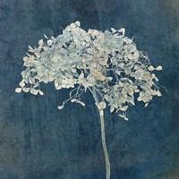 Hortensia Silhouette Sapphire Fine Art Print