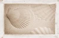 White Shells and Sand Fine Art Print