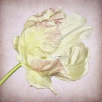 Pink Parrot Tulip Painting III Fine Art Print