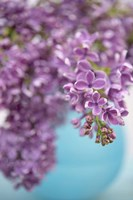 Lilacs in Blue Vase II Fine Art Print