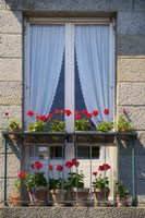 Window With Red Geraniums Fine Art Print