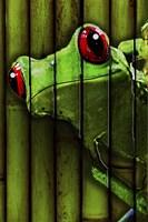 Camo Frog Fine Art Print