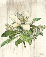 Magnolia de Printemps no Words Fine Art Print