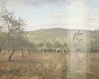 Jeremiah Olive Grove II Fine Art Print