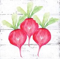 Farm Fresh Radishes Framed Print