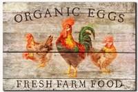 Organic Eggs Fine Art Print