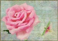 Pink Roses II Framed Print