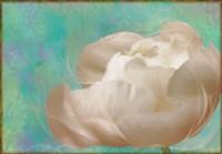 Peony Flower I Framed Print