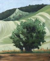 Waitsburg Wheat Country Fine Art Print