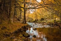 Black Forest River Fine Art Print