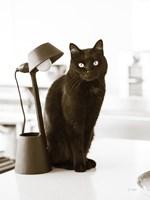 Lights Cat Action Fine Art Print