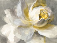 Abstract Rose Fine Art Print