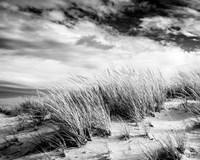 Beach Dunes Fine Art Print